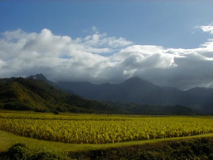 16. And finally, a picturesque Kauai farm near Princeville.