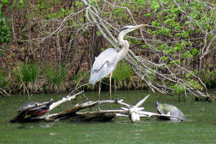 19. A spectacular wildlife shot at Parvin State Park.
