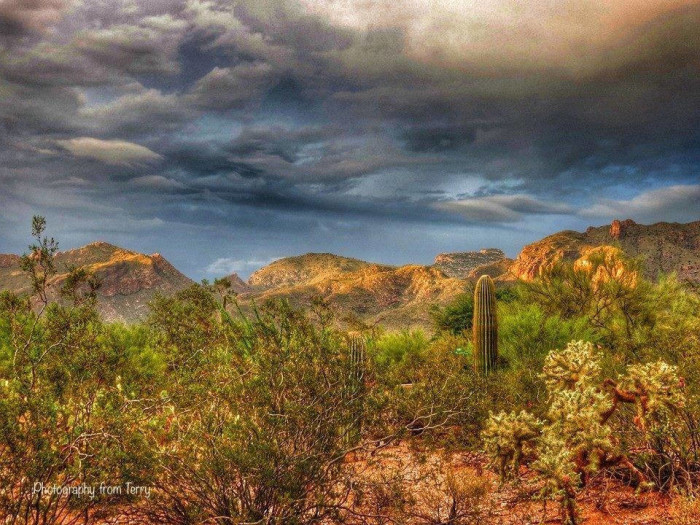 15. There's nothing quite like the smell of the desert after rainfall.