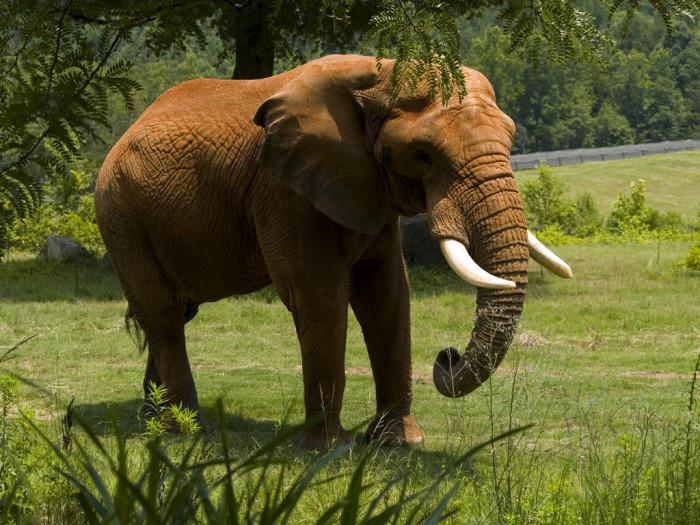 4. The North Carolina Zoo
