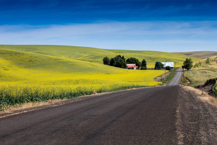 4. This canola field was captured along the road near the town of LaCrosse.