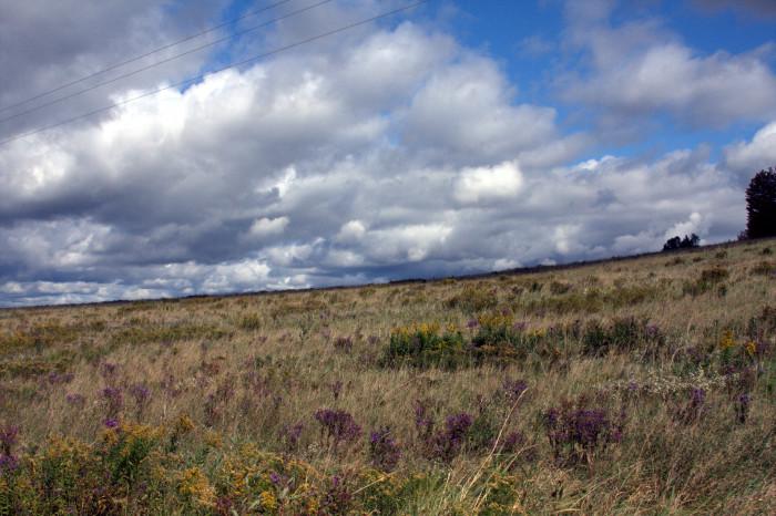 11. A breathtaking open field in Cattaraugus.