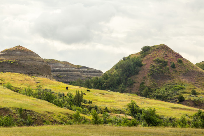 12. Bright and beautiful hills near Sentinel Butte, ND.