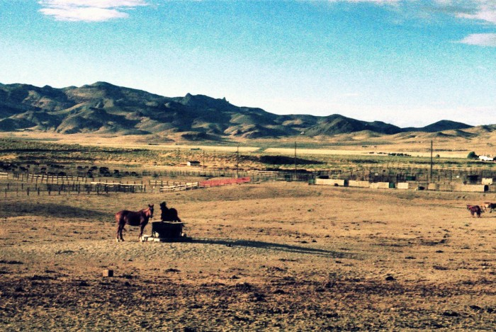 3. A horse farm near Pyramid Lake.