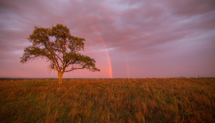 16. A double rainbow hugs this tree after a storm.