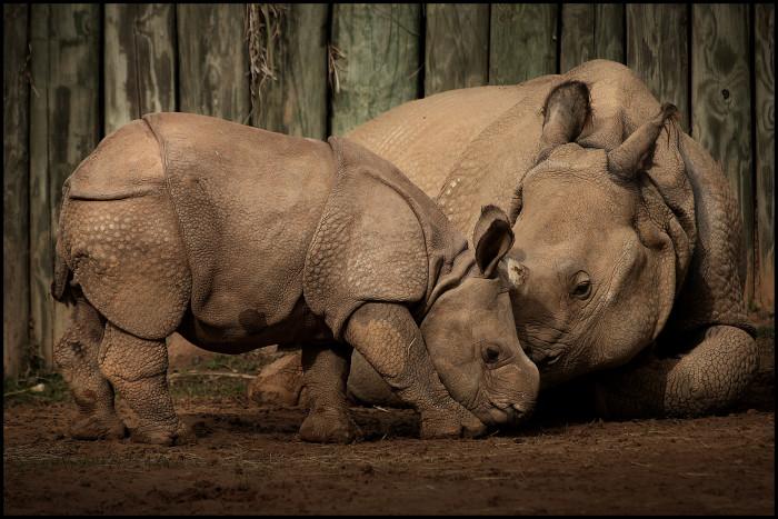 9. Montgomery Zoo