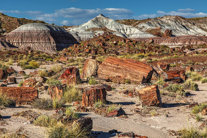 13. Petrified Forest National Park