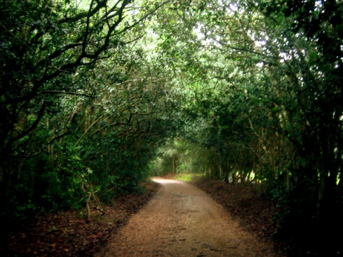 Or simply wander the oak lined paths and admire the gorgeous oak trees.
