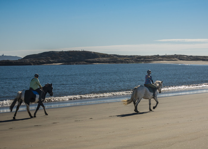 """3. """"In a world where only two people are left to ride horses on Popham Beach!"""""""