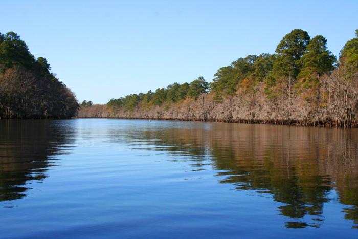 9. Caddo Lake (East Texas)