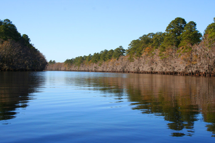 12. Caddo Lake, in East Texas, is the second largest natural lake in the Southern U.S. and the only large one in Texas.