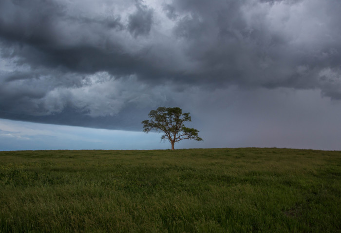 21. This lonely tree could be so symbolic in a movie.