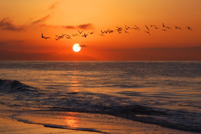 13. Early birds taking flight over Santa Barbara at sunrise.