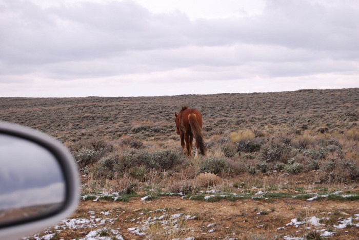 7. Pilot Butte Wild Horse Scenic Loop Tour