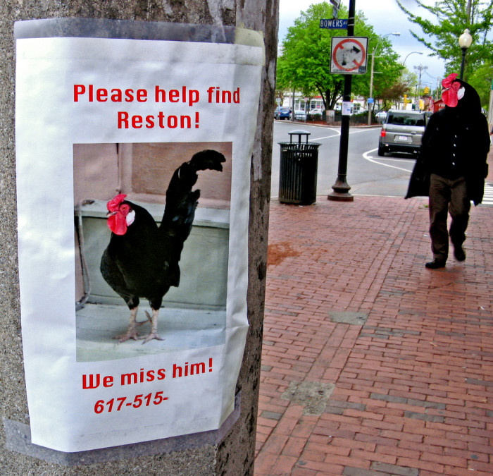 "8. Your hipsterness has probably reached critical mass when you need to put  up ""lost"" fliers for your rooster in Davis Square."