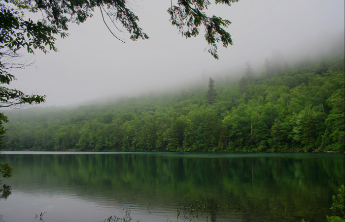 """1. """"In a world where the fog descends on Western Maine...and never lifts..."""""""