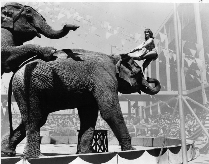"5. ""Shrine Circus - 22 February 1972."" (Topeka)"