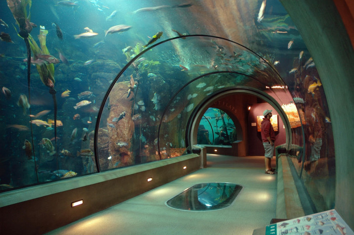 1. The Oregon Coast Aquarium