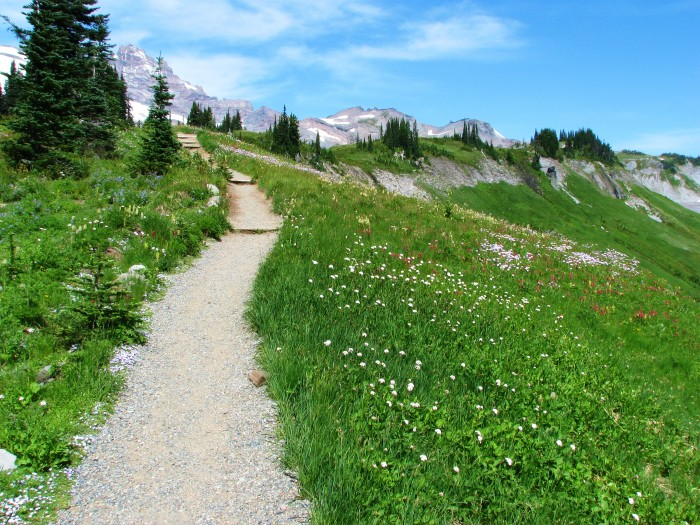7. You've been to Mount Rainier National Park and Olympic National Park.