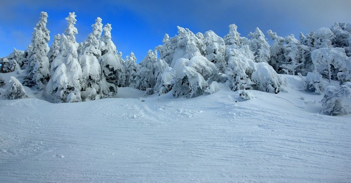 8. These trees look otherworldly covered in snow.