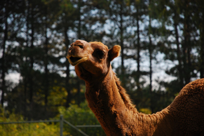 12. The state of Idaho forbids you from fishing off the back of a camel.