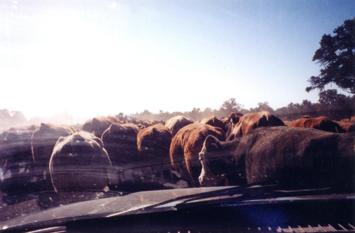 6. But sometimes our commutes run into a bit of a traffic jam...