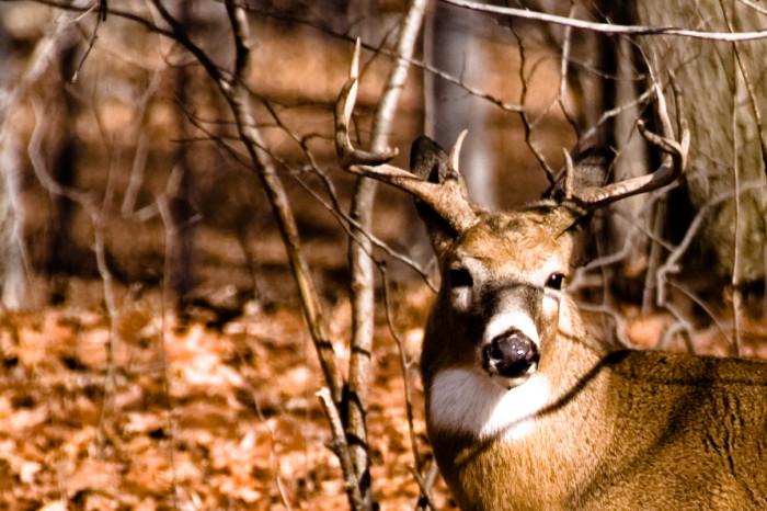 20.  Deer Jacking