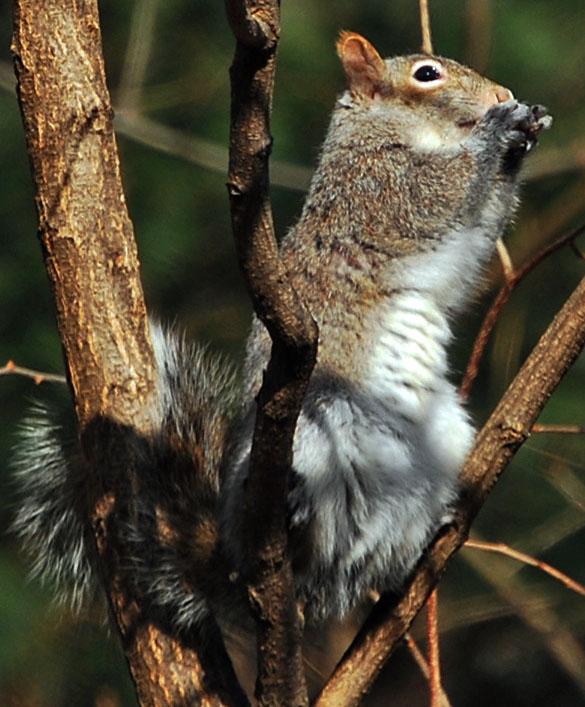 10 Photos Of Connecticut Wildlife
