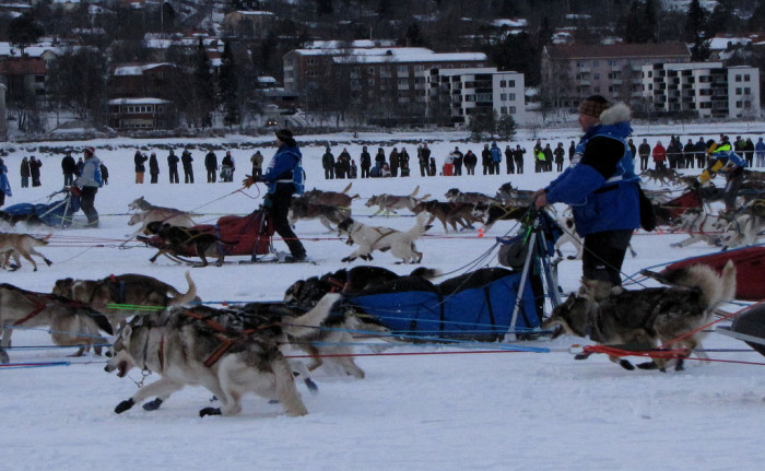 4) Our state sport is mushing, now that's cool.
