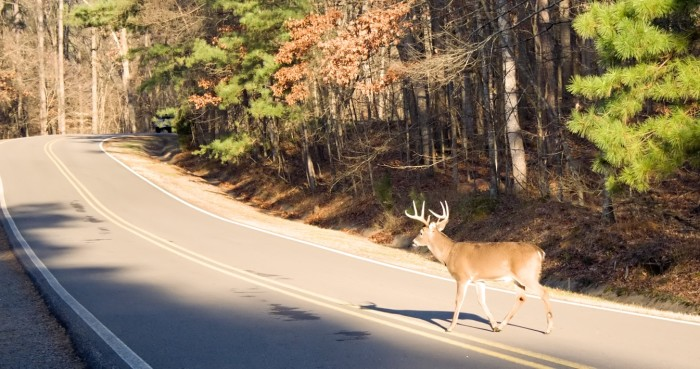 4. Feeling nervous whenever you see a deer in the middle of the road.