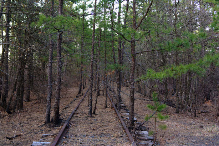 Abandoned tracks running through the forest.