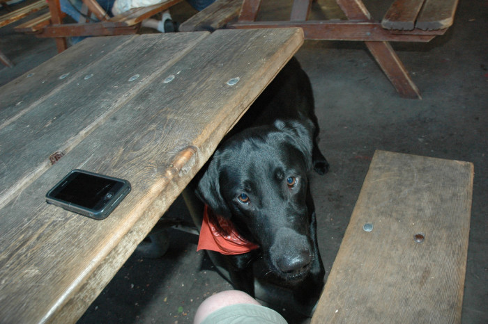 9. We bring our dogs to the pub.