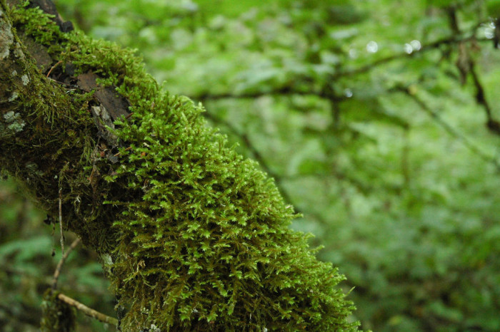 5. You won't find anywhere more alive and green than the forests of Oregon.