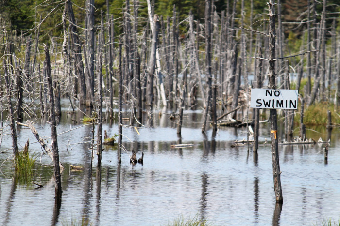 10. In rural Maine, locals know that any place could turn into a swimming hole.