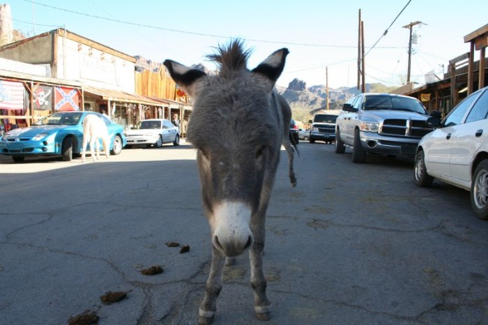 14. Another Route 66 find, this town is located along the Mother Road and is known for their burro population.