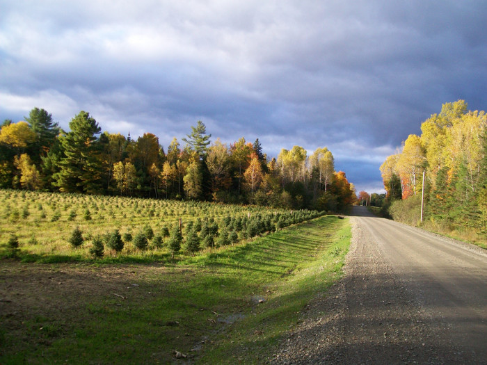 1. Rural Maine means long, lonesome roads to collect your thoughts.