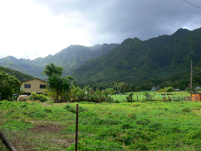 4. Because of its location at the base of Mount Waialeale, one of the wettest spots on earth, this Kauai farm is quite lush.