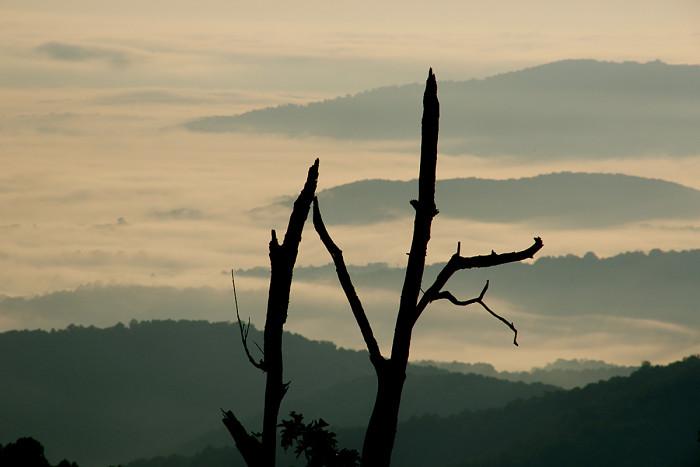 Dead Tree, Shenandoah National Park