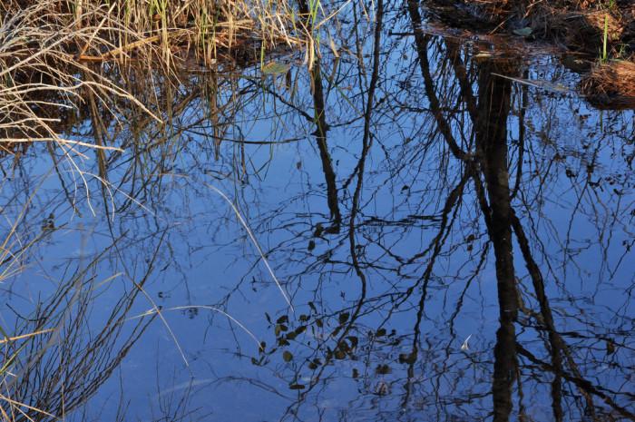 27.  Ticklenaked Pond