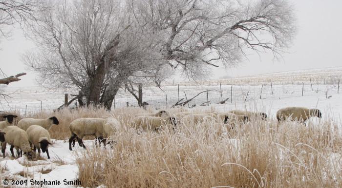 A wintery wonderland - spots in south dakota
