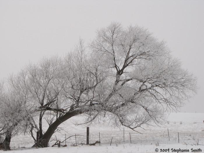 Wearing the weight of winter - spots in south dakota