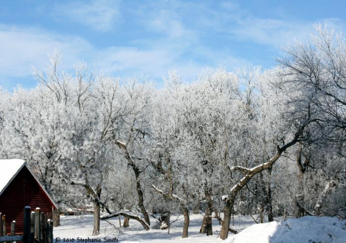 Frozen winter trees - spots in south dakota