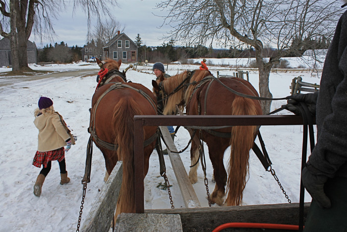 7. A wintry day on a horse powered farm in Penobscot.