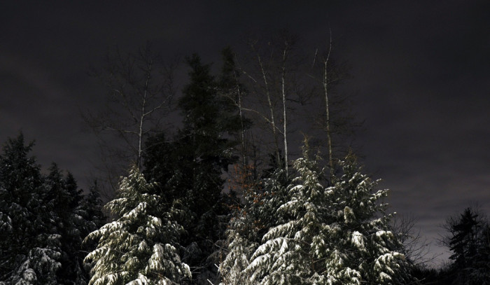 17. Snow-covered trees are perfect for night skiing.