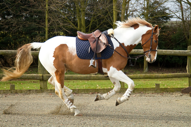 4. Riding a horse on the highway for the purpose of testing its speed is not allowed either.