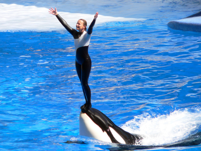2. The occasional trip to Sea World