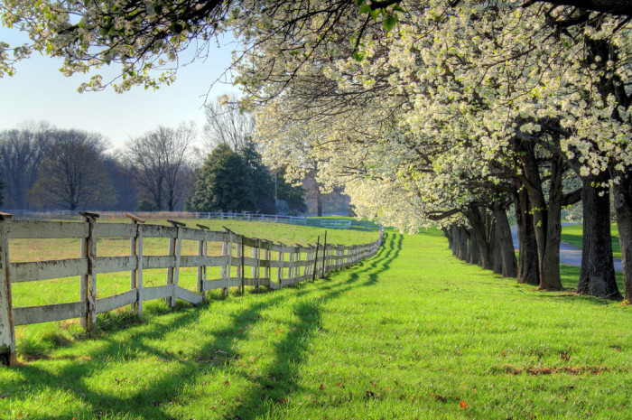 18. A stroll along this fence would be a peaceful way to spend an afternoon.