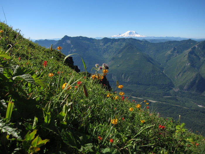wildflowers, mcclellan butte, and rainier