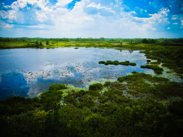 What makes Okefenokee Swamp so fascinating is the untouched, undisturbed land.