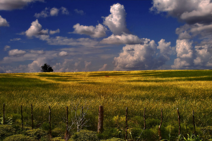 9. We have more farmland than any other state - 130,500 acres, to be exact.